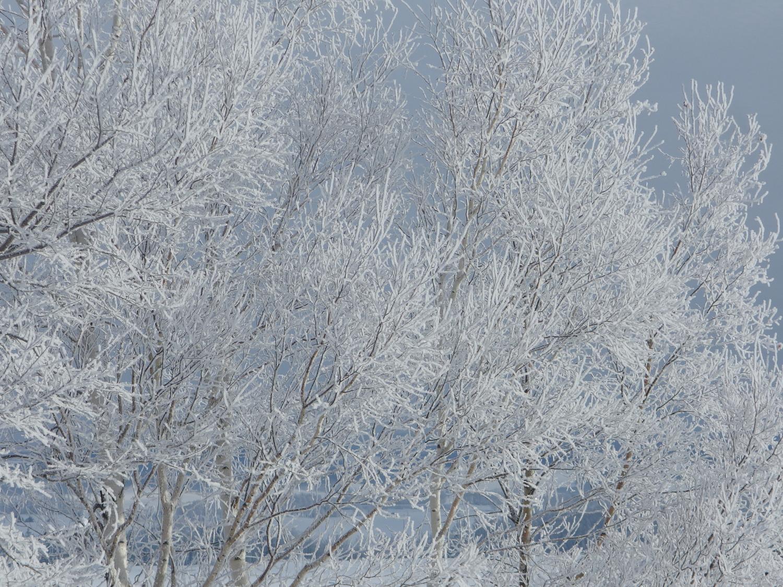 ぐっと冷え込んだ朝は美しい景色が必ず広がります。